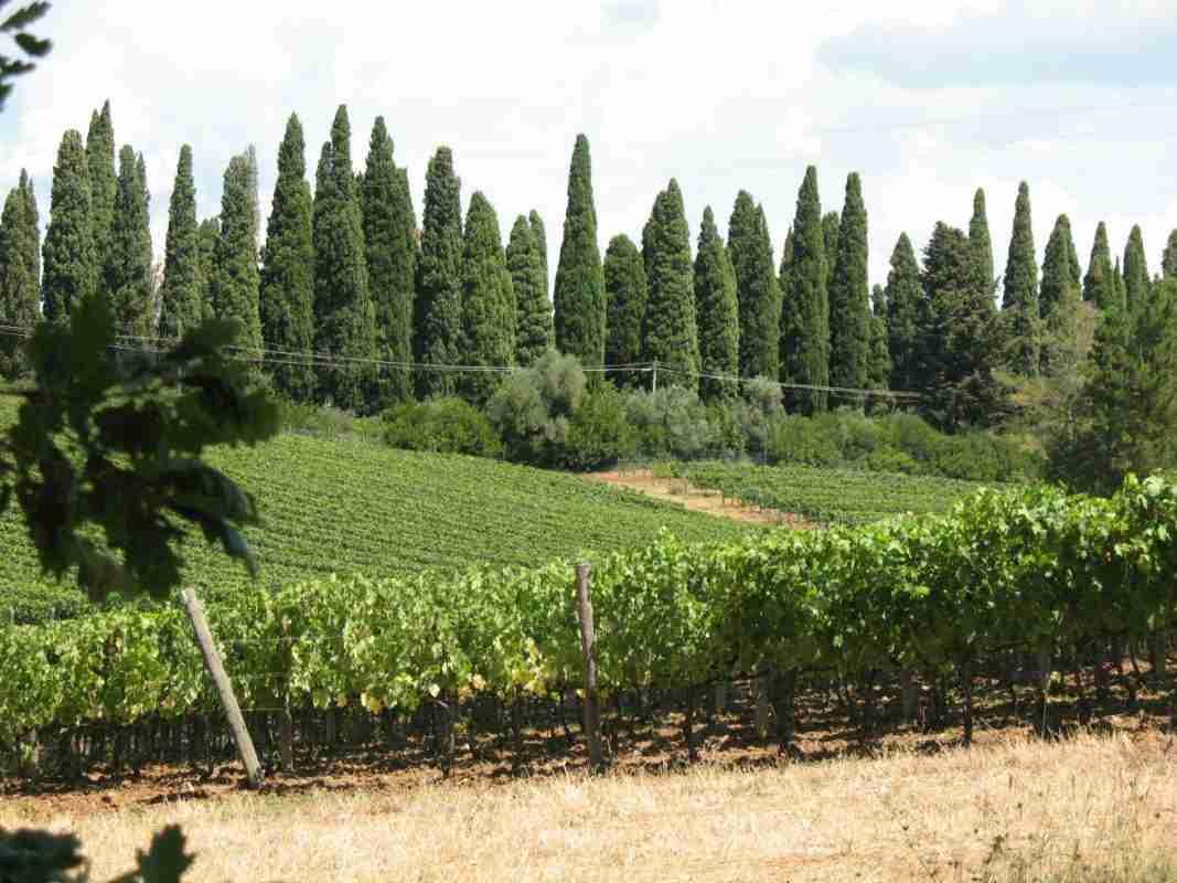 Ialiaanse wijnen